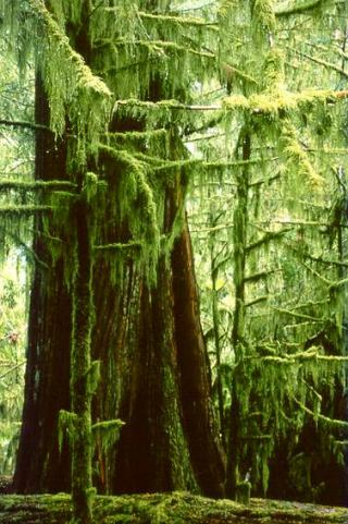 cathedral-grove-moss.jpg