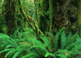 hoh-rainforest-olympic-np.jpg